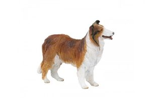 COLLIE-DOG-30230.jpg