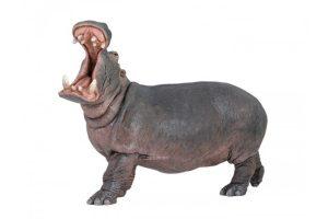 HIPPO-50051.jpg