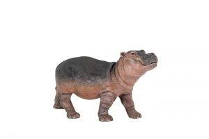 HIPPO-CALF-50052.jpg