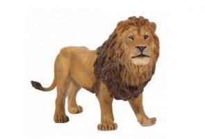LION-50040.jpg