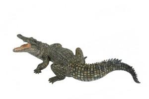 Sharks, Crocodiles & Frightening Creatures