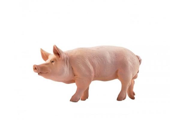 PIG-51044.jpg