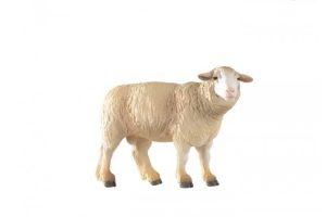 SHEEP-51041.jpg