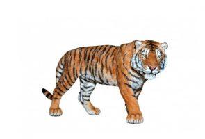 TIGER-50004.jpg