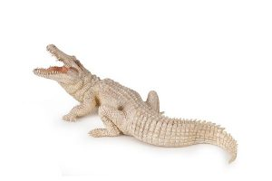 WHITE-CROCODILE-50140.jpg
