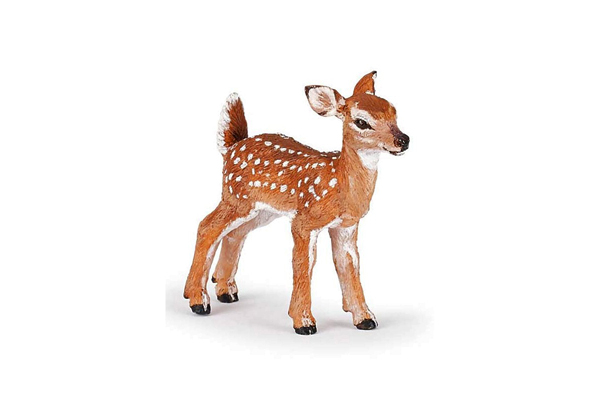 Canadian White-Tailed Fawn