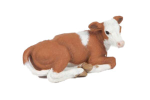 Lying Brown & White Calf